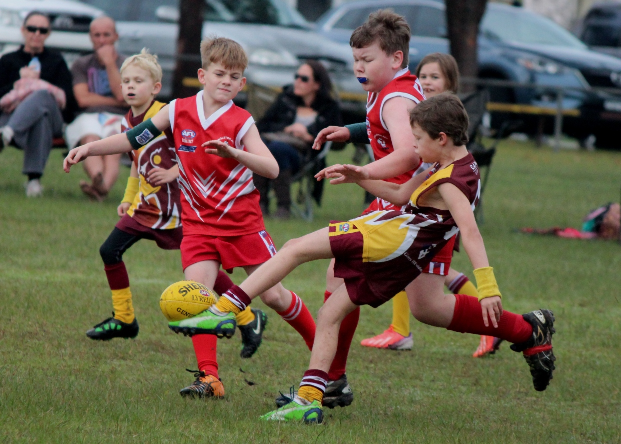 junior afl, cardiff hawks juniors
