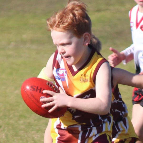 afl auskick player, cardiff hawks